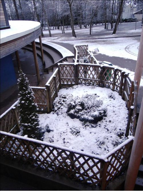 Premières neiges dans la cour des Cèdres en 2015