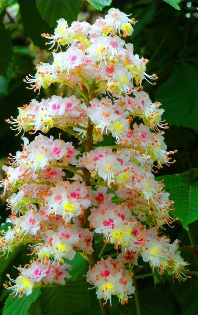 Quétigny en fleurs - Mai 2016