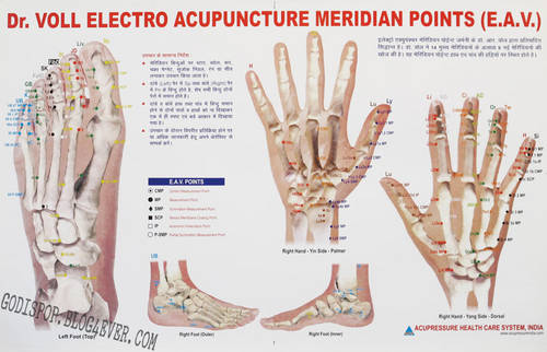 BB Dr voll electro acupuncture meridian points.jpg