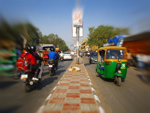 Small IMG_2014 Sadar bazar dog.jpg