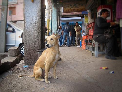 Small IMG_2074 Chien Sadar bazar.jpg