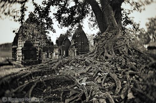 Small DSC_0146 Temples et arbre Shivrinarayan.jpg