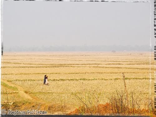 Small IMG_5304 Champ de riz.jpg