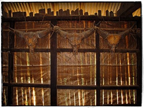 Small 22 IMG_7793 Têtes de Mithun Gorong Longwa.jpg