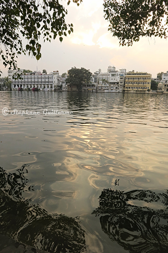 IMG_0567 Udaipur lake between leaves Small.jpg