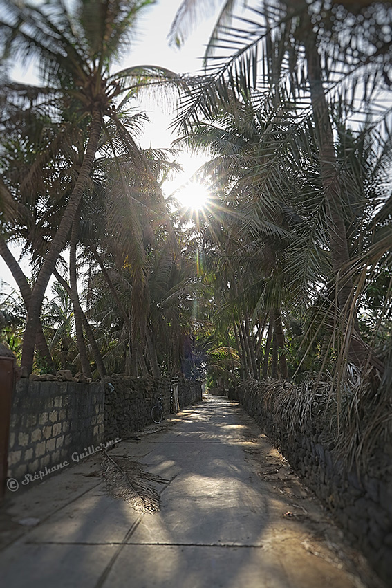 IMG_4874 Chemin cocotiers Diu Small.jpg