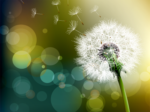 Dandelion-Flower-bokeh-effect-photography.png
