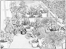 jardins 4.jpg
