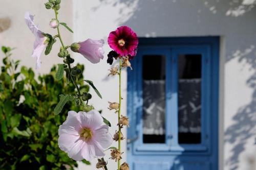 ile-d-houat-maison_large_rwd.jpg