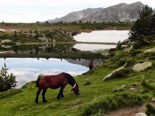 chevaux du Carlit.JPG
