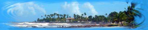 palmeraie1.png
