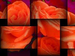 texture117.jpg