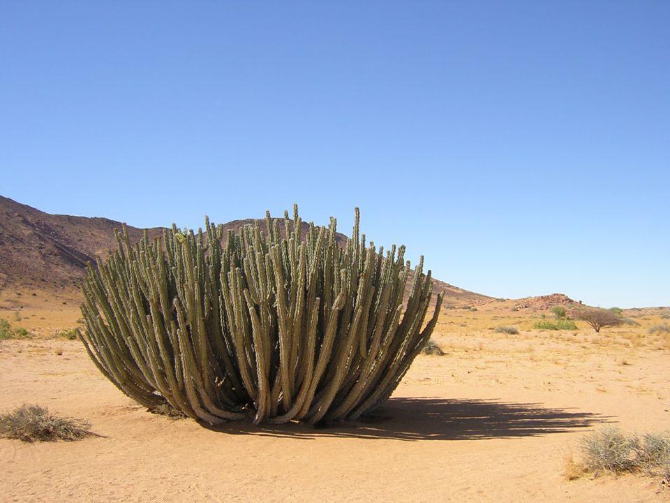 succulentesbio