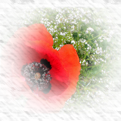 https://static.blog4ever.com/2012/11/720506/fond-coquelicot-2.png