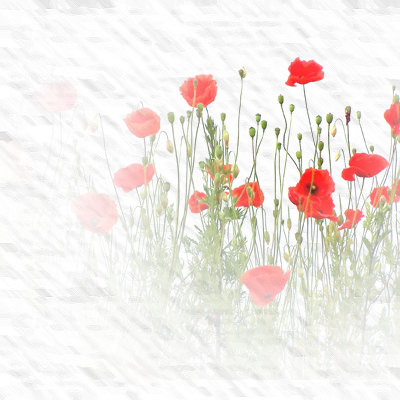 https://static.blog4ever.com/2012/11/720506/fond-coquelicot.png
