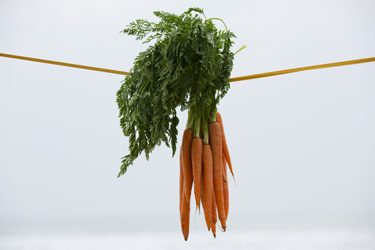 https://static.blog4ever.com/2012/11/720911/Carottes-Blog-Site-bonjour-Bien-Etre-Photographe-Noel-Fouqu.jpg