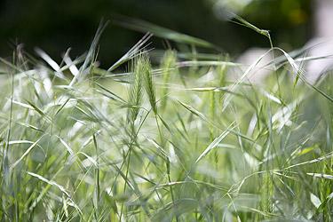 https://static.blog4ever.com/2012/11/720911/Jardin-Blog-Bonjour-Bien-Etre-Photographe-Noel-Fouque.jpg