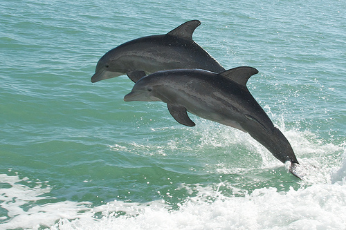 Agir comme un dauphin.jpg