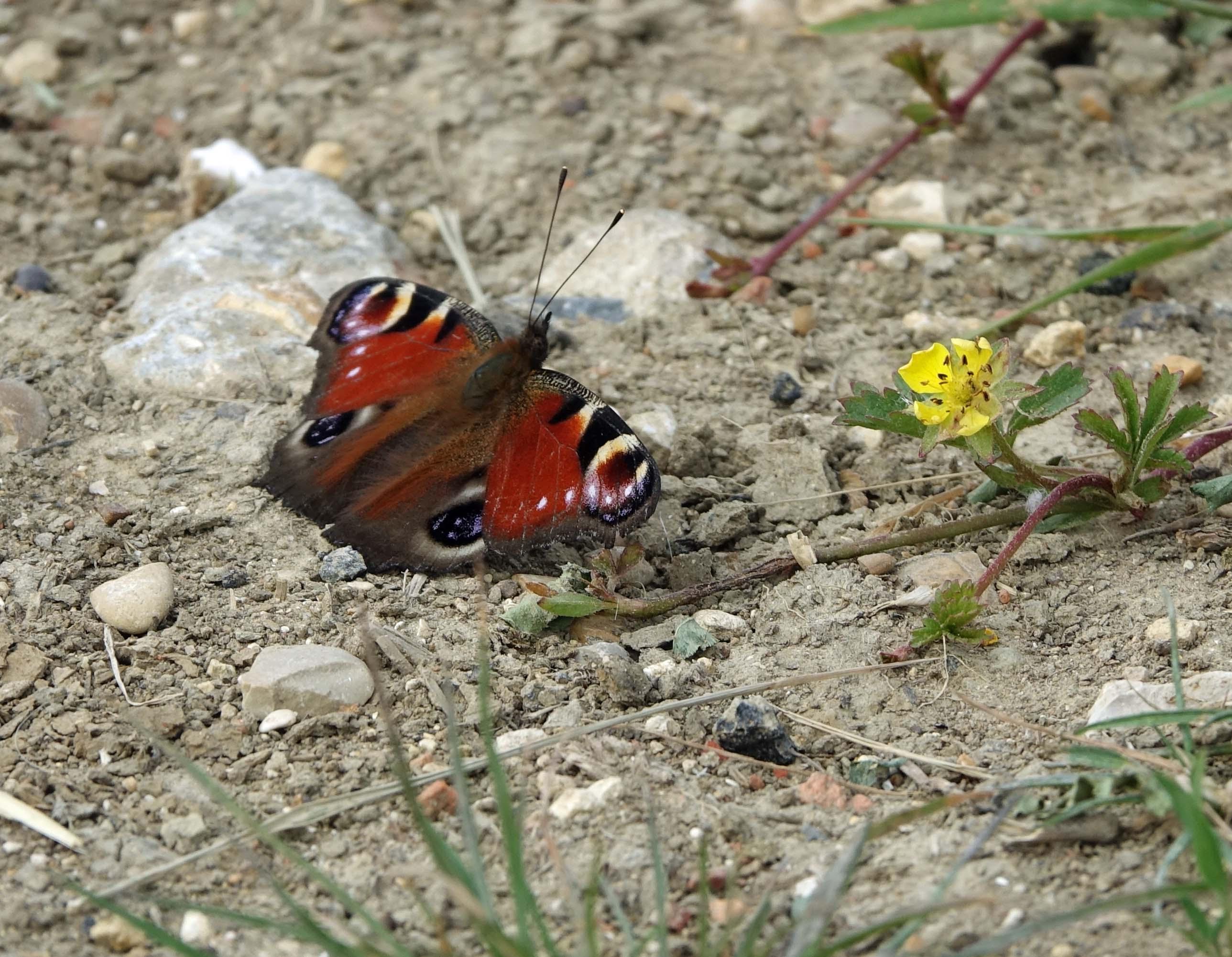 Fleur et papillon.jpg