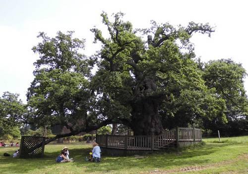 Pick nick oaktree.JPG