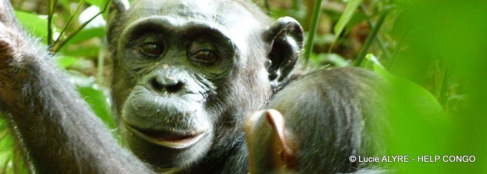 HELP-CONGO-STORIES