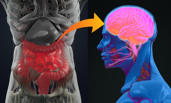 nouveaux-liens-entre-microbiote-intestinal-et-depression.jpeg