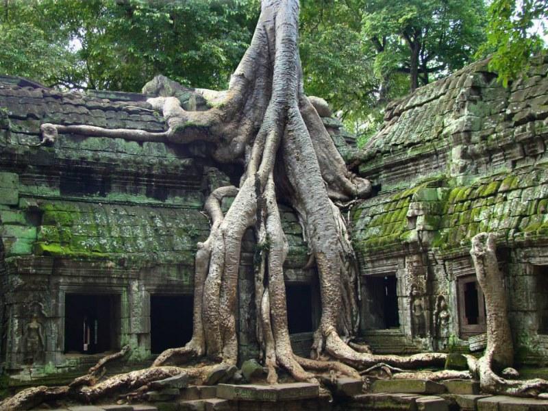 Le temple Ta Prohm sur le site d'Angkor au Cambodge.jpg