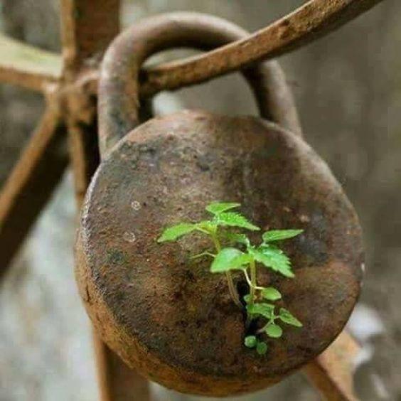 Cadenas rouillé...Les forces de la nature semblent en être la clé.png