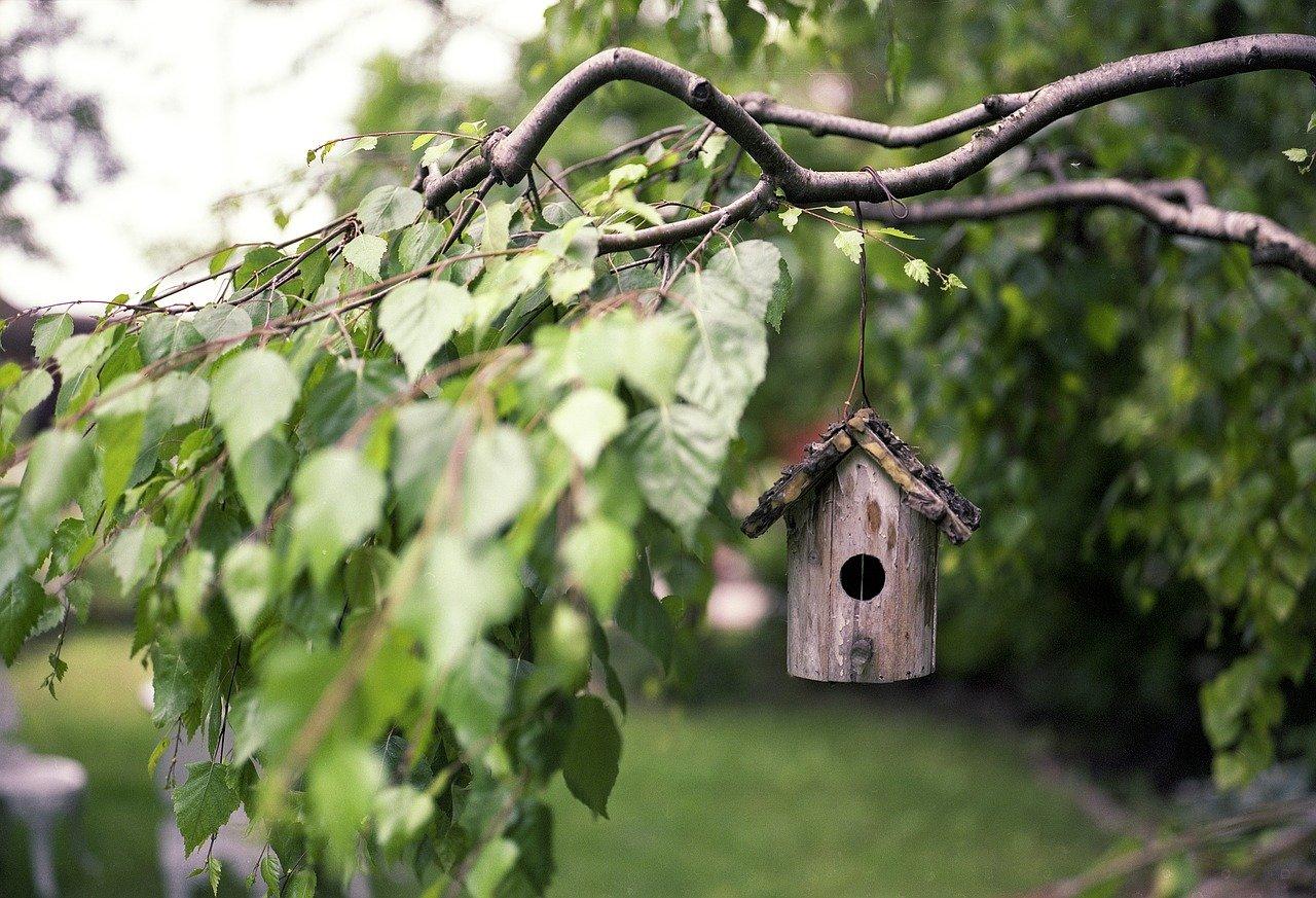 bird-feeder-2344414_1280.jpg