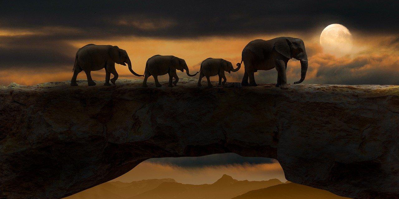 elephants-5661842_1280.jpg