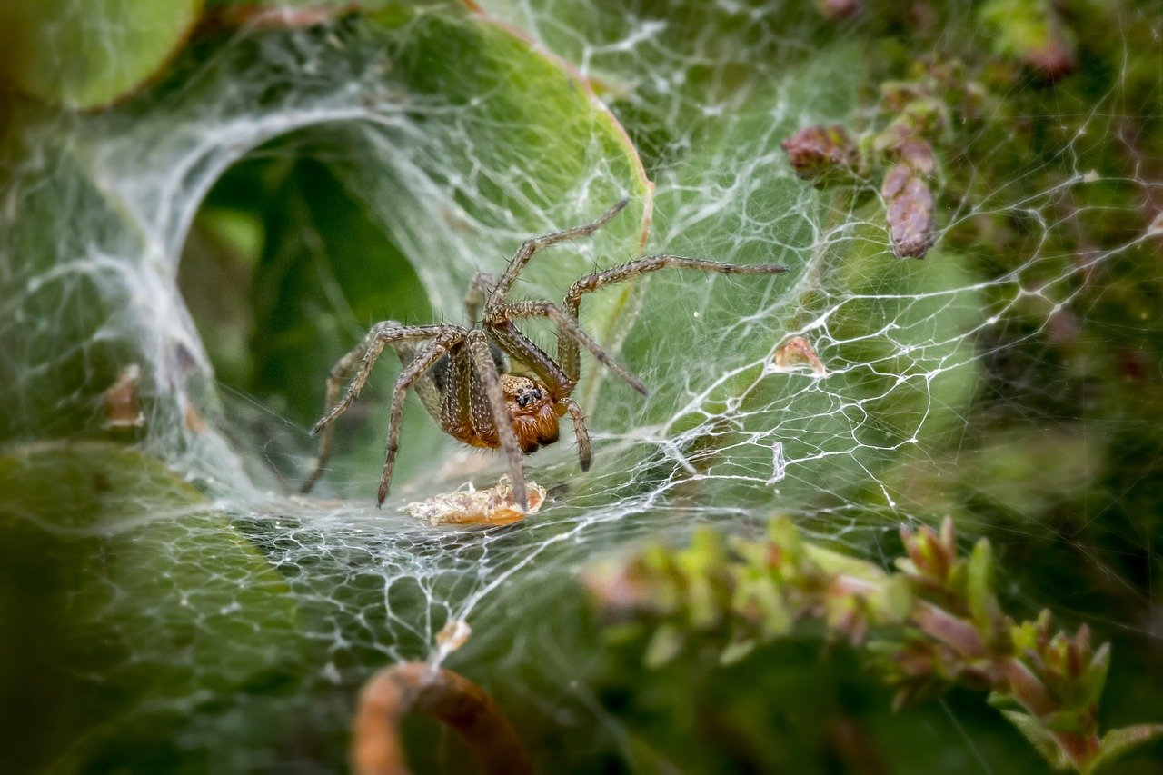 funnel-web-spider-4865535_1280.jpg