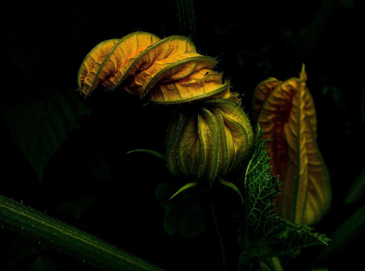 zucchini-5263781_1280.jpg