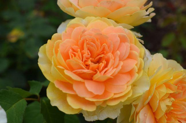 concours photo thème  fleur