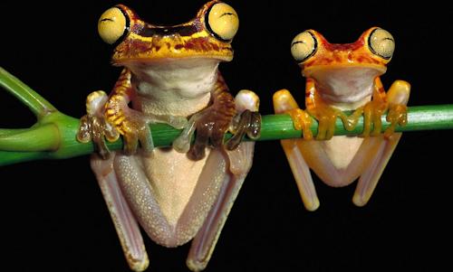 https://static.blog4ever.com/2013/02/727680/grenouilles1.png