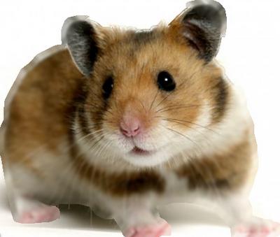 https://static.blog4ever.com/2013/02/727680/hamster.png