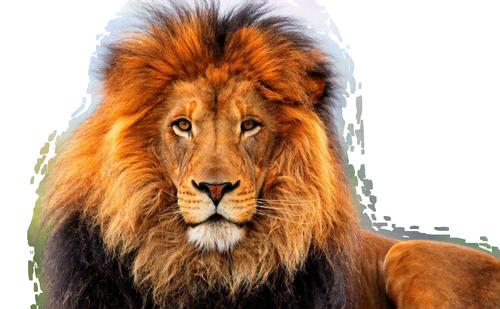 https://static.blog4ever.com/2013/02/727680/lion-26-03-2014-PFS.png