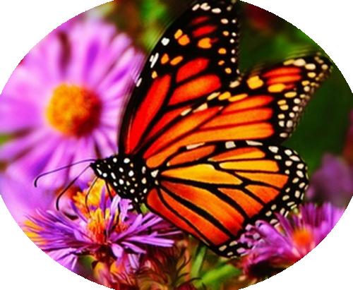 https://static.blog4ever.com/2013/02/727680/papil7-23-06-2014.png