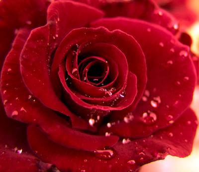 https://static.blog4ever.com/2013/02/727680/rose2-23-01-16.png