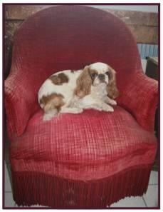 Daphné fauteuil rouge3.jpg