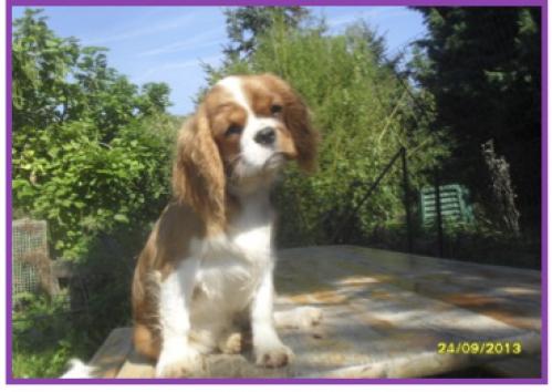 I'm wi-fi de canine country3.jpg