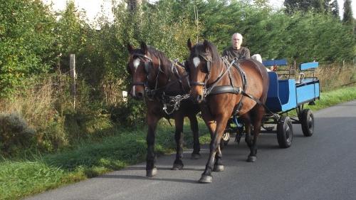 arbo breton et voiture bleu 001.JPG