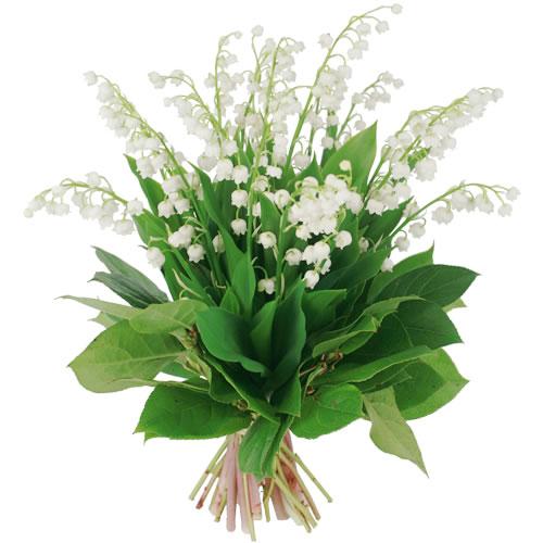 fleurs muguet.jpg