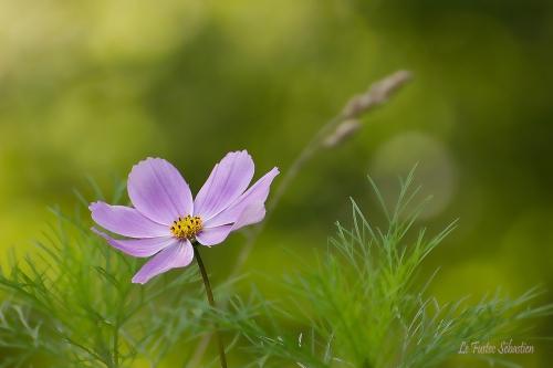 Copie de fleur.f.jpg