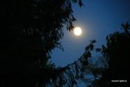 lune full.jpg