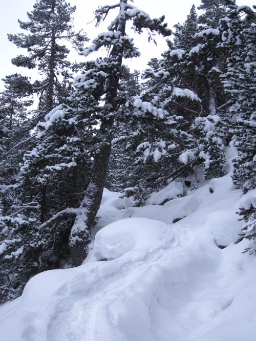 Vallée du Marcadau - 1800 m -19-01-2014.JPG