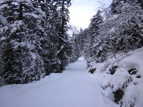 Vallée du Marcadau en revenant au Pont d'Espagne vers 1600 m - 19-01-2014.JPG