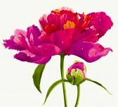 fleurs-et-les-bourgeons.jpg