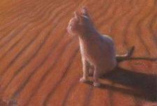 chat-désert.jpg