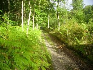 bolbec-chemin-forestier.jpg