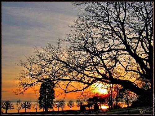img-0177-coucher-soleil-lac-leman-derriere-les-arbres.jpg